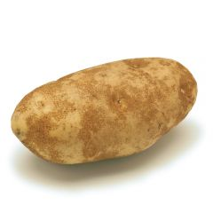 Single XL Baking Russet Potato