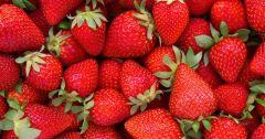 Strawberries - 16 Oz